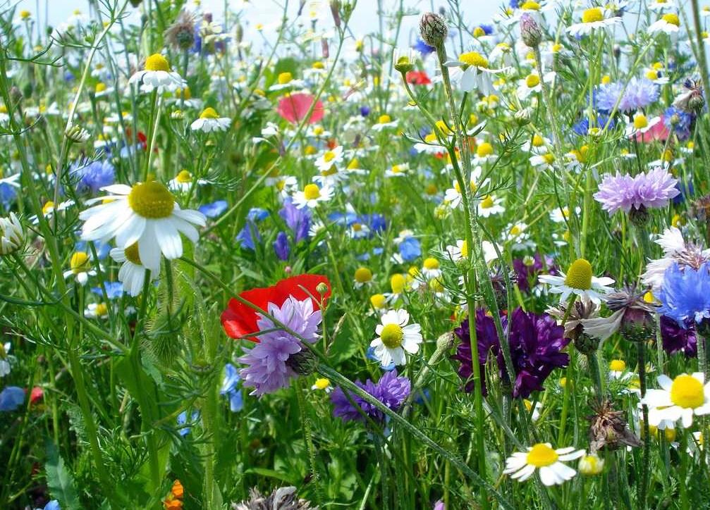 http://francoisbriancon.fr/wp-content/uploads/2014/04/les-prairies-fleuries.jpg